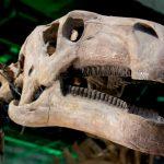 恐竜博2011に行ってきました